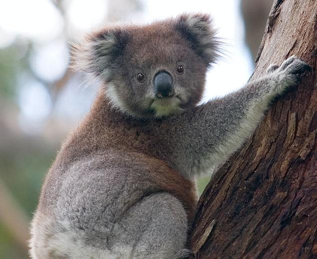 Australia_IMAGES_1